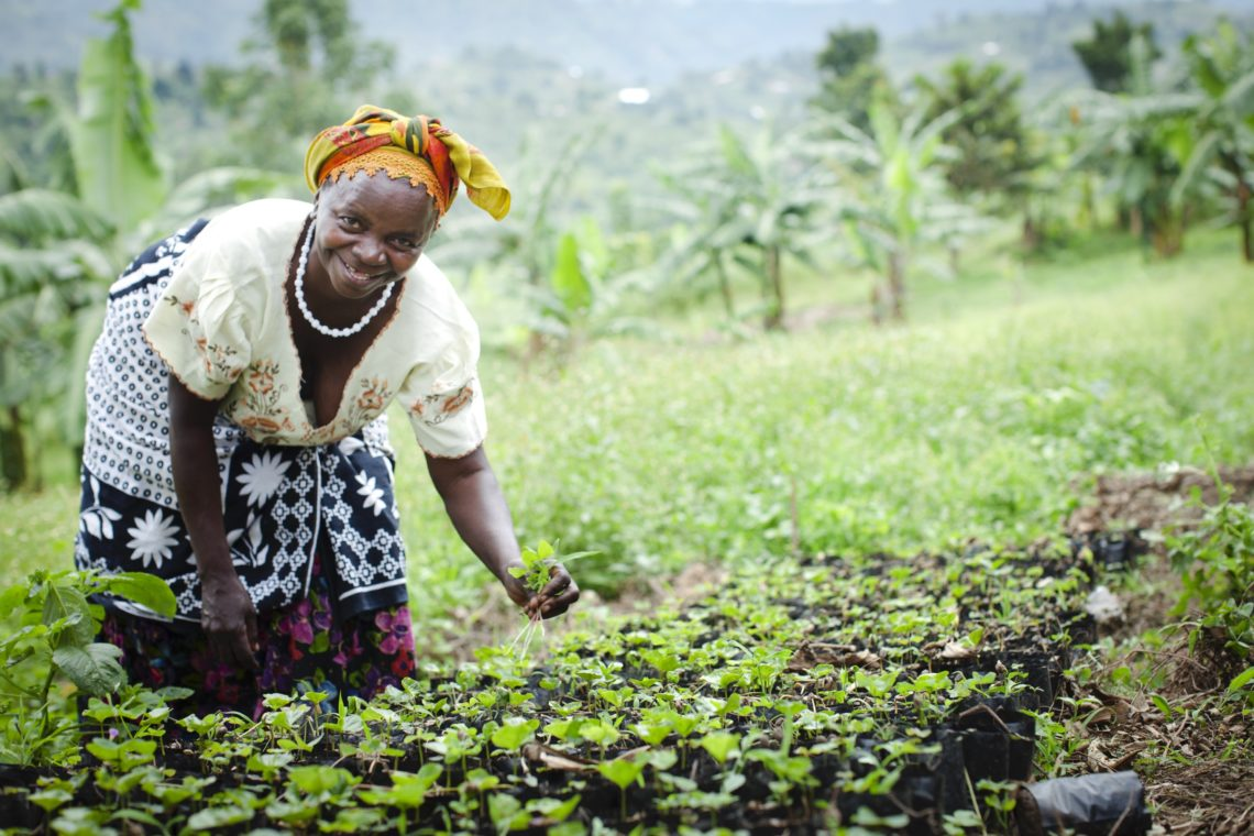 Uganda Coffee Grower