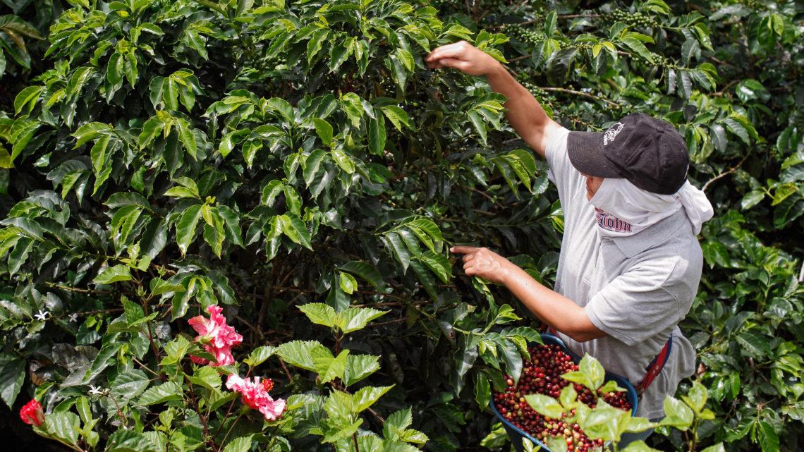 Columbian coffee farmer