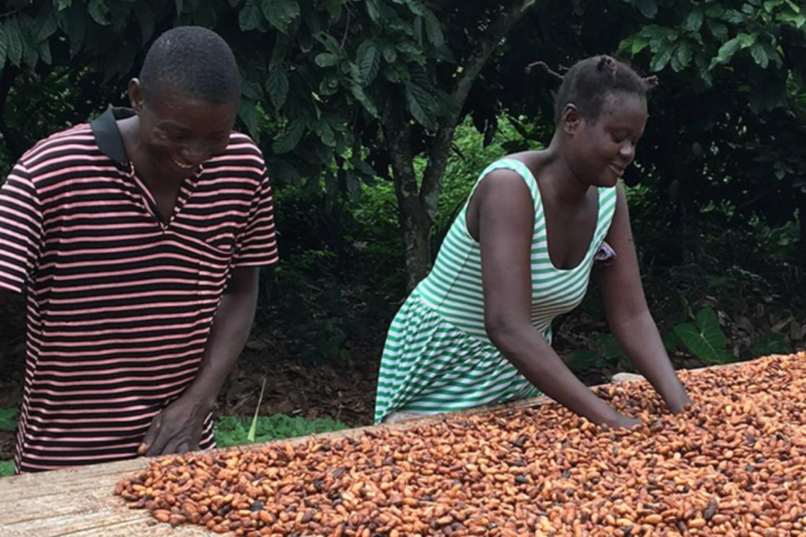 Cocoa farmers working with beans