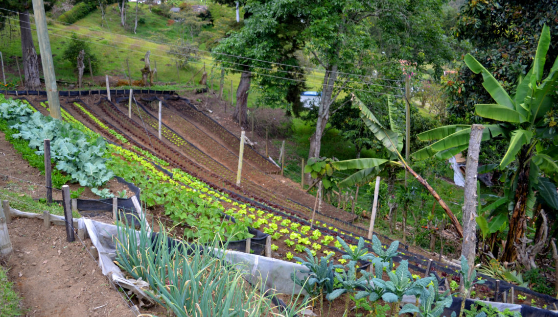 Farm in Columbia