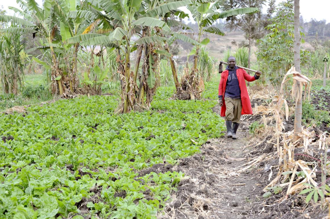 James Nayami's Walking in Spinach Field