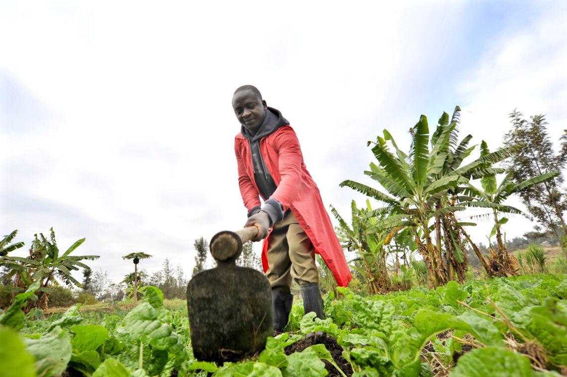 James Nayami's Spinach Farmer Kenya