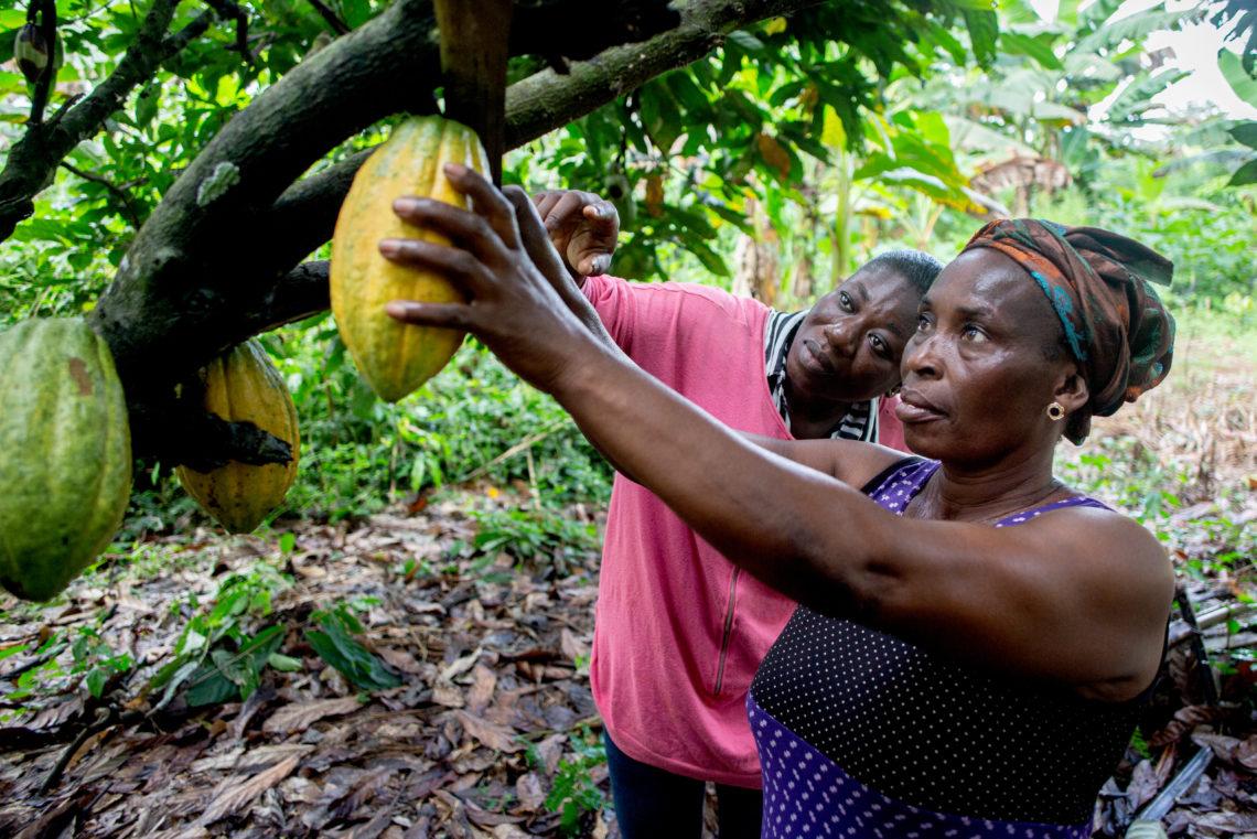 Joyce Kyei Cocoa Farmer