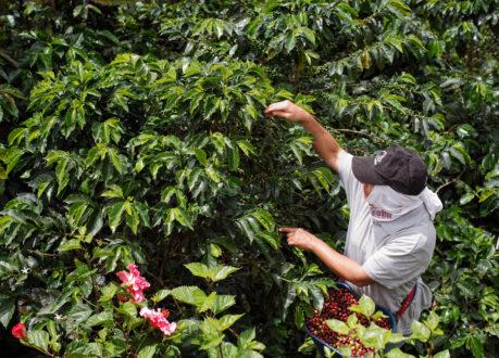 Coffee farmers in Columbia