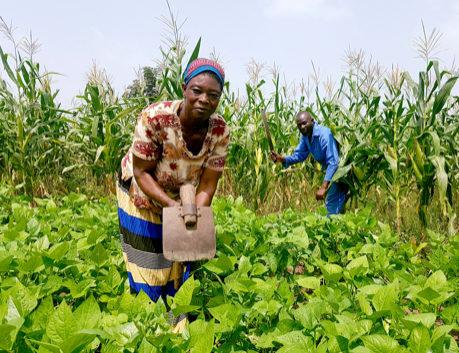 Smallholder Farmers plowing field