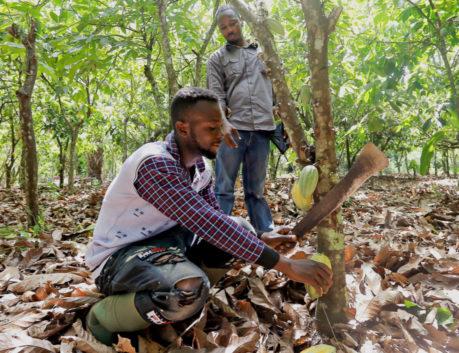 Selasse Gidiglo - Agronomist