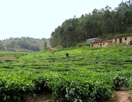 Where we work rwanda