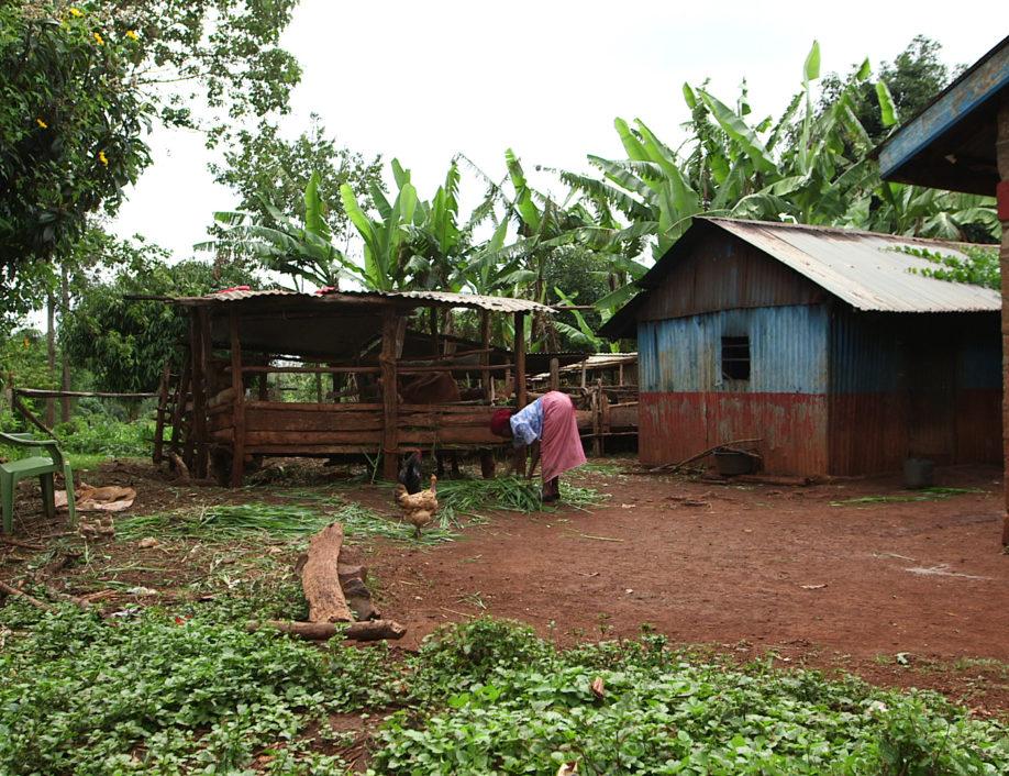 Kenyan farm working at her chicken coop